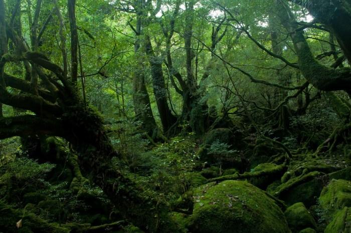 「自然の緑が多い屋久島」