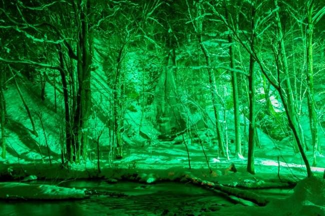 青森県十和田市「奥入瀬渓流」ライトアップの様子