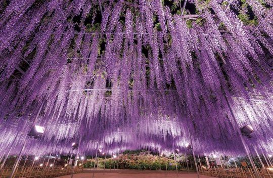 これからも栃木県の応援をお願いします。