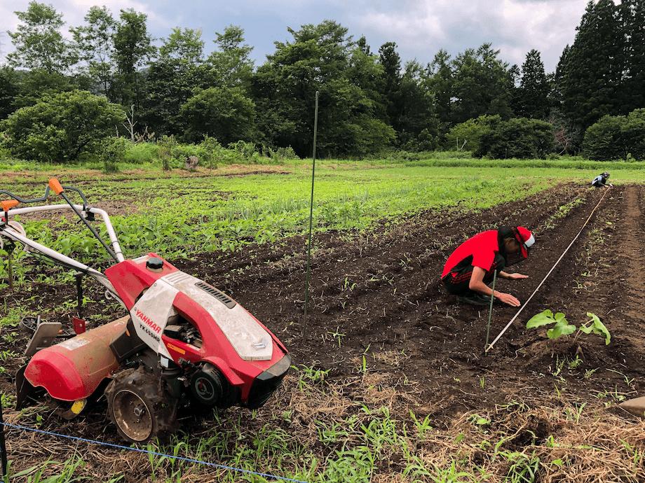 自分が最低限生きていくために必要な食料は自分で作れるようになろう!と、自宅の近くに畑を借りて野菜や蕎麦の栽培も行っている。