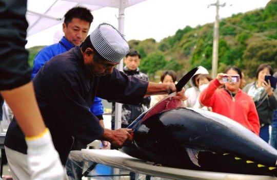 これからも高知県大月町の応援をよろしくお願いいたします!
