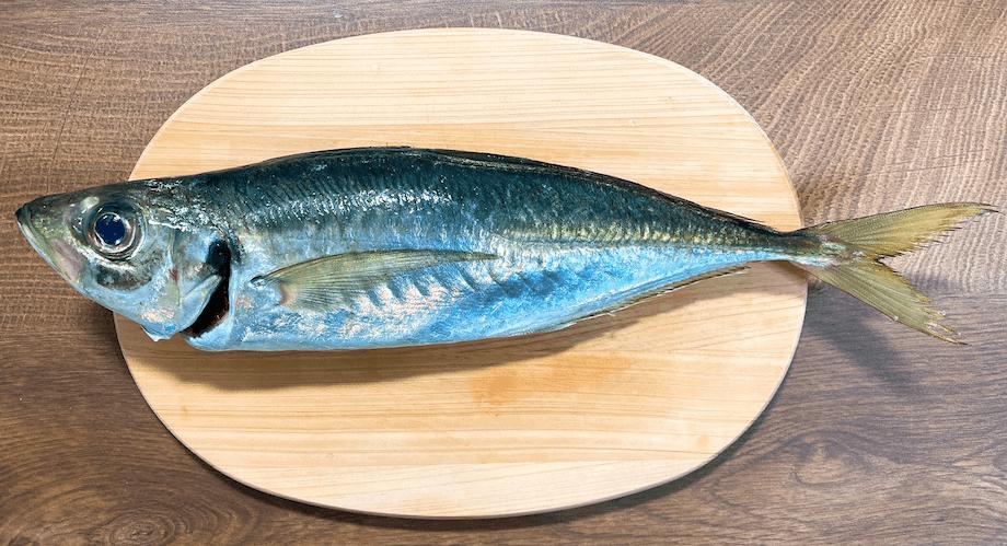 あまりに立派な大きさのアジに「本当にアジか?」と疑ってしまうほど(もっと小ぶりな大きさの魚だと思っていました、、)。