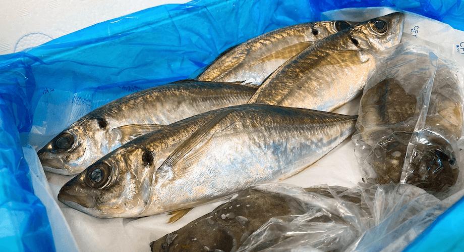 九石大敷組合のある高知県須崎市では多種多様な魚が獲れるため、その時期に獲れたての魚をお送りしています。この日は、まさに今が旬の立派なアジ4匹とコーイカ2匹が届きました。