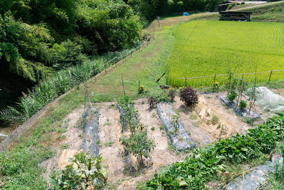 開墾から始まった現在の畑。米や野菜などがたわわに実っている。
