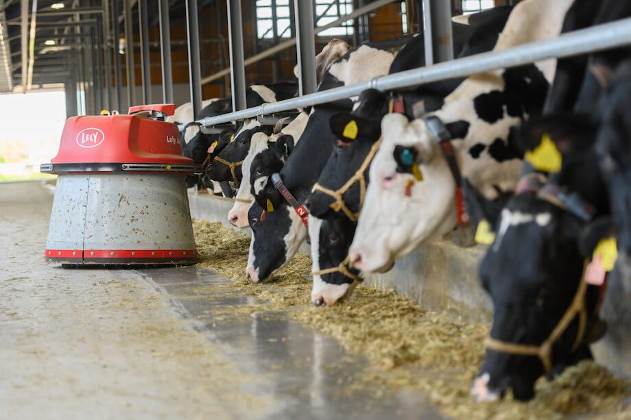 こちらの牛舎では、糞尿の清掃や餌に使用している干し草の管理、牛の乳搾りまで全自動で行う。牛が自ら乳搾りの機械に入り、機械が乳搾りを行う様子は圧巻。全ての牛の情報を一括管理しているため、乳搾り機に頻繁に入ってくる牛に対しては、体調を考え乳搾りを行わないなども、機械にプログラムしているという。